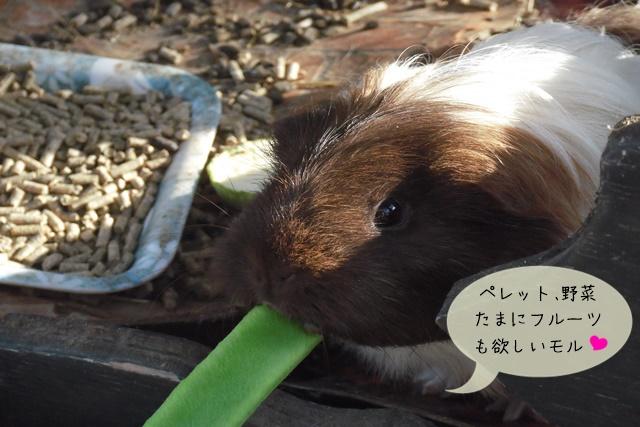 主食牧草ペレット野菜